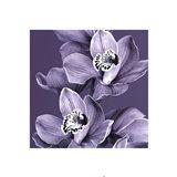 Mauve Orchid #2 Art Print