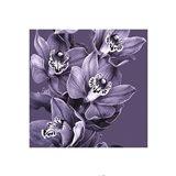 Mauve Orchid #3 Art Print