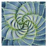 Spiral Succulent Art Print