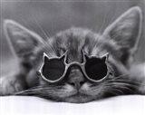 Cool Cat I Art Print