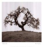 Hillside Oak Tree Art Print