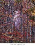 Glowing Autumn Forest, Virginia Art Print