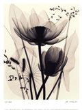 Lotus and Grasses Art Print