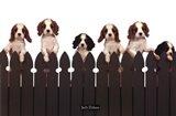 Curious Puppies Art Print