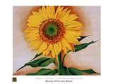 A Sunflower from Maggie, 1937 Art Print