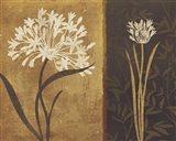 Yin Yang II Art Print