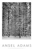 Pine Forest in Snow (embossed) Art Print