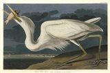 Great White Heron Art Print