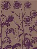 Chrysanthemum 14 Art Print