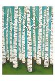Summer Birches Art Print