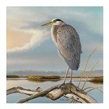 Marsh Watch - Great Blue Heron Art Print