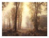Under the Tall Pines Art Print