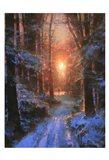 Winter's Embrace Art Print