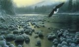 Eagle Over Water Art Print