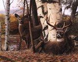 Autumn's Majesty Art Print
