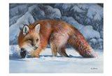 Fox at the Pines Art Print