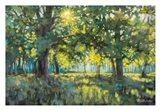 Through Silent Trees Art Print
