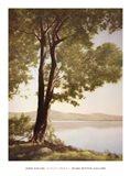 Sunlit Trees I Art Print
