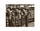 Bareback Saddles Art Print
