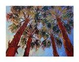 La Quinta Palms Art Print