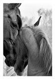 Cheers n' Foal Art Print