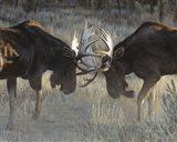 Moose Challenge Art Print