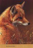 Curious Red Fox Art Print