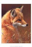 Curious- Red Fox Art Print