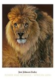 Power and Presence- African Lion Art Print