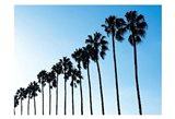 La Jolla Palms Art Print