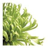 Green Bloom 2 (detail) Art Print