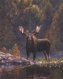 North Country Moose detail Art Print