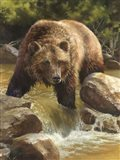 Grizzly at Roaring Creek Art Print