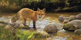 Morning at Honey Creek Art Print