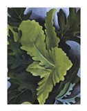 Green Oak Leaves Art Print