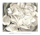 The White Calico Flower, 1931 Art Print