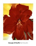 Red Amaryllis, 1937 Art Print