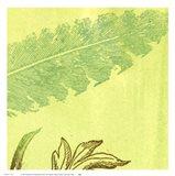 Feather Leaf Art Print
