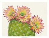 Desert Blossoms I Art Print