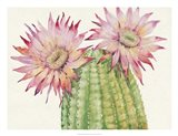 Desert Blossoms II Art Print