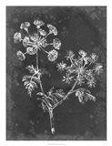 Slate Floral I Art Print