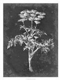 Slate Floral II Art Print