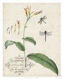 Canna & Dragonflies I Art Print
