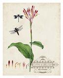 Canna & Dragonflies II Art Print