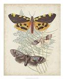 Butterflies & Ferns VI Art Print