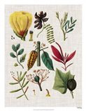 Floral Assemblage I Art Print