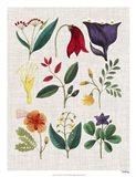 Floral Assemblage IV Art Print