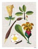 Floral Assemblage V Art Print