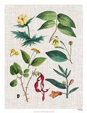 Floral Assemblage VI Art Print