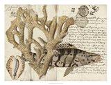 Sealife Journal II Art Print
